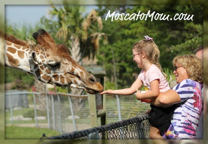 Our Day At The Gulf Breeze Zoo