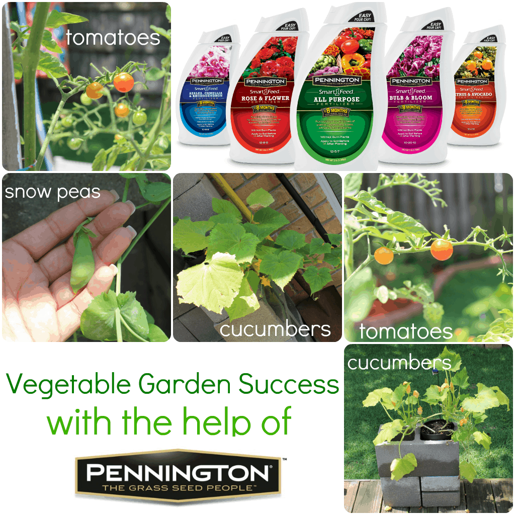 Veggie Garden Success With Pennington