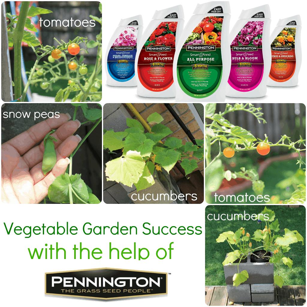 Veggie Garden Success With Pennington #Giveaway