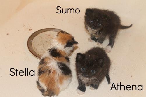 feeding kittens