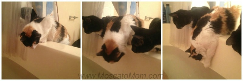 Kids, Kittens, and Why I Should Have Bought Stock in Toilet Paper
