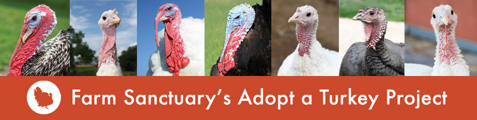 farm sanctuary adopt a turkey