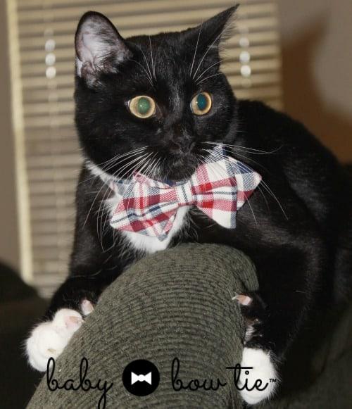 baby bow tie pet bow tie