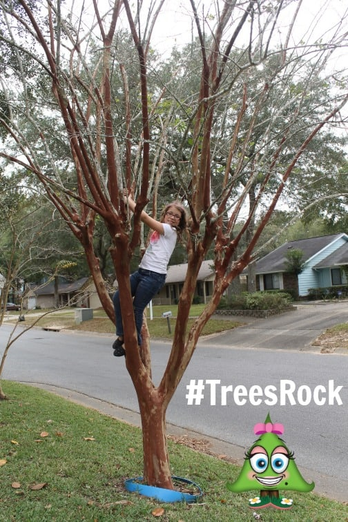 scotties trees rock campaign