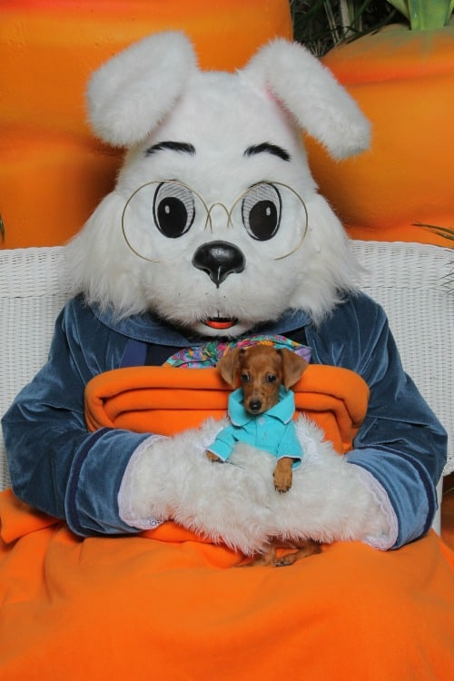 Pet Night with the Bunny, Photo Credit - The Noerr Programs