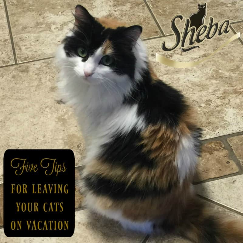 Petsitting Made Easy with SHEBA® Perfect Portions
