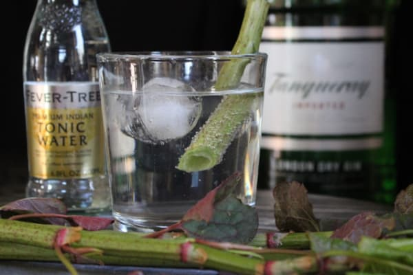 Knotweed Gin and Tonic